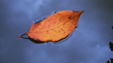 Sonbahar hastalıklarından korunabilirsiniz