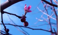 Fotoğraf güncesi/çiçekler