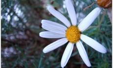 Fotoğraflarım /çiçekler
