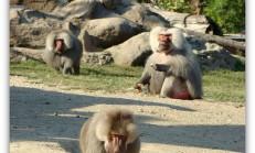 Bursa/ Hayvanat bahçesi