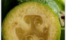 Feijoa (Kaymak Ağacı) ve reçeli