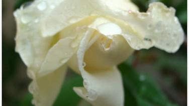 Yağmur / Nurullah Genç