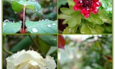 Yağmur/Mim