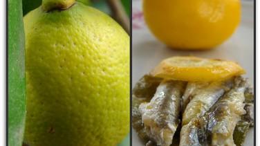 Limonlu hamsi buğulama