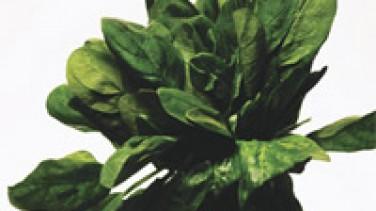 Depresyona karşı yeşil kür /İbrahim Saraçoğlu